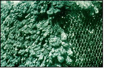 Copper Nickel Alloys Sea Water Intakes